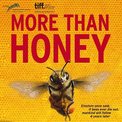 More Than Honey Stream